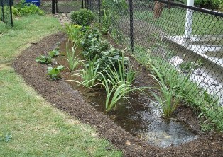 Photo of how a rain garden functions