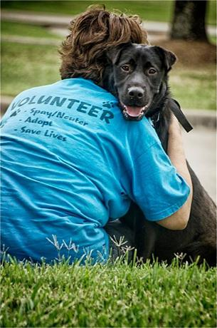 animal shelter volunteer_thumb.jpg